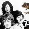 Nueva especie de rana ecuatoriana es bautizada en honor a Led Zeppelin
